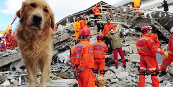 Rettungshund im Einsatz - Quelle: rettungshunde-brh.de