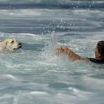 Rettungshund Wasser - Bild: augenblicke.t-online.de - Foto: Arno Balzarini / AFP